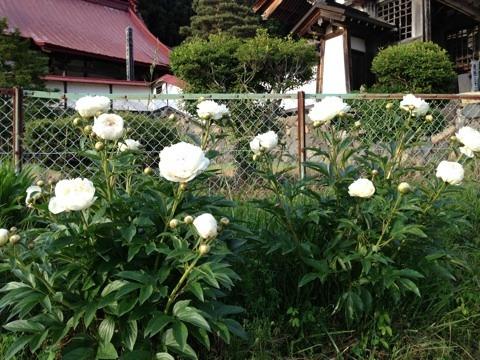 不思議大好き ババタヌキ-image
