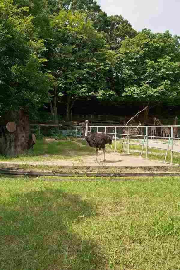 babatanukiのブログ-日之本元極気功教室 動物園
