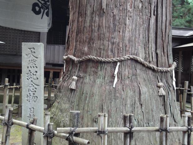 babatanukiのブログ-日之本元極気功教室 スギ