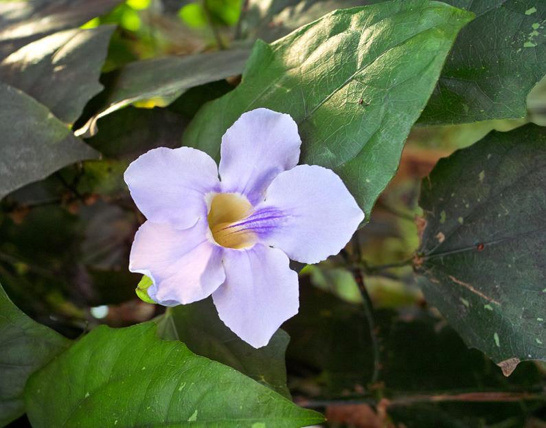 babatanukiのブログ-日之本元極気功教室 白の花