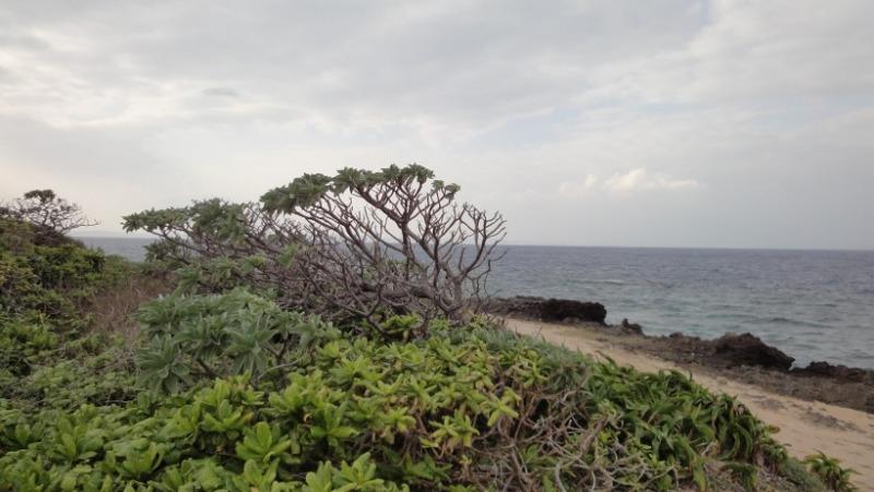 不思議大好き ババタヌキ-日之本元極気功教室 海岸