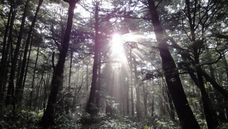 不思議大好き ババタヌキ-日之本元極気功教室 上高地