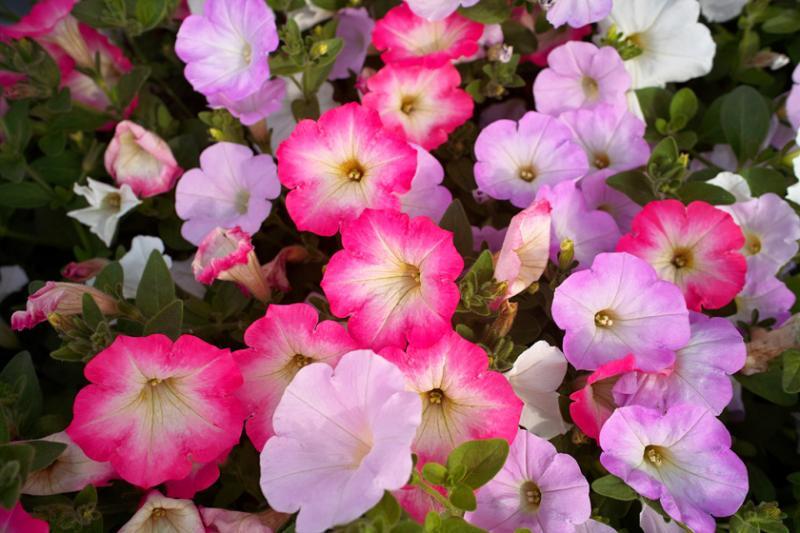babatanukiのブログ-日之本元極気功教室 やさしい 花