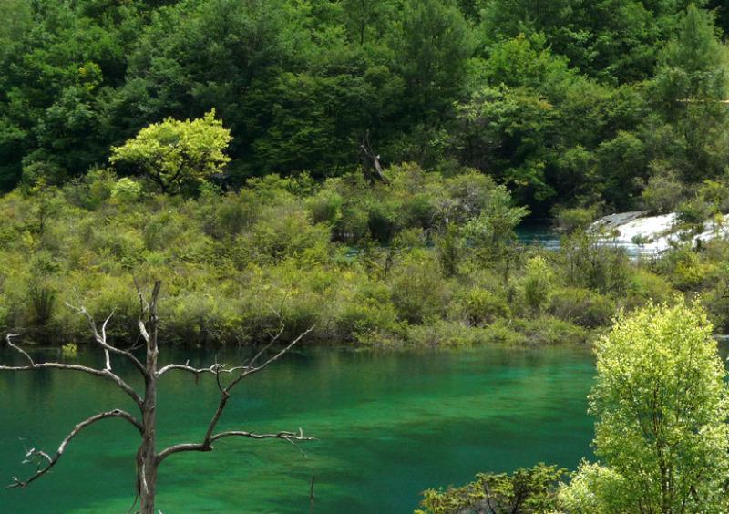 babatanukiのブログ-日之本元極気功教室 緑の湖