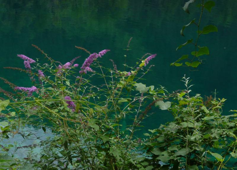 babatanukiのブログ-日之本元極気功教室 湖のはな