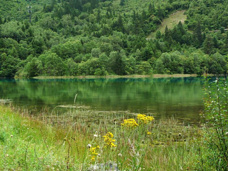 不思議大好き ババタヌキ-日之本元極気功教室 花と湖